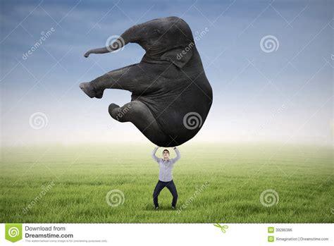 Man Lifting Heavy Elephant Stock Photo - Image: 39286386