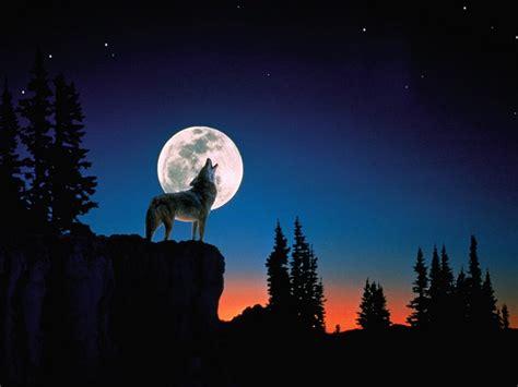 fondos de pantalla de lobos en movimiento fondos de pantalla fondos de pantalla de lobos aullando fondos de pantalla