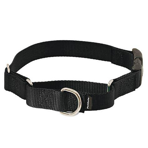 petsmart collars petsafe 174 snap martingale collar collars petsmart