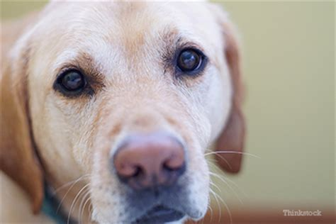 do dogs prostates cancer and disease in dogs
