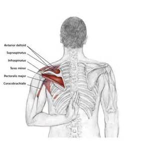 Shoulder exercises frozenshoulder shoulder pain neck shoulder
