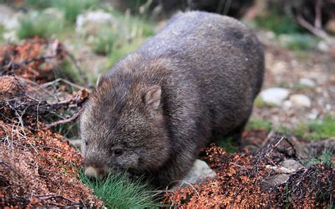 St Rani animali strani e teneri 10 specie incredibili animali