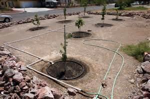 best way to water fruit trees watering artistic gardener