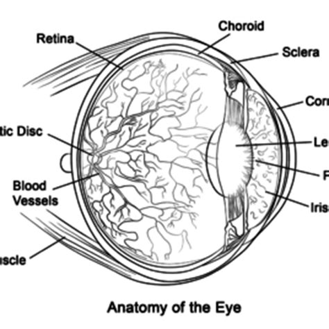 eye anatomy coloring page eye coloring sheet free printable coloring pages eyes free
