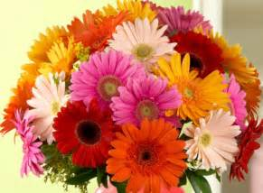 gerbera colors do s and don ts of s day flowers