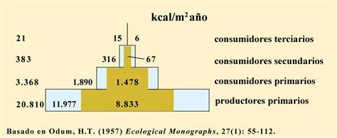 energia alimentare archivo piramide energia png la enciclopedia
