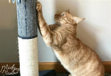 prevent cat from scratching couch how to stop cats from scratching furniture midgetmomma