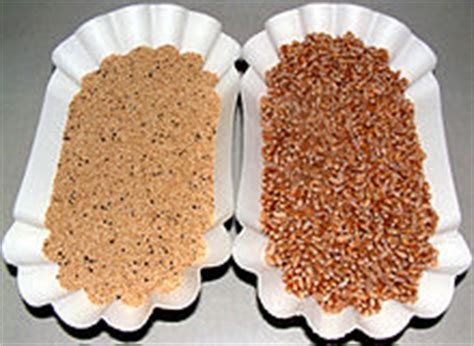 whole grains meaning in malayalam amaranth grain