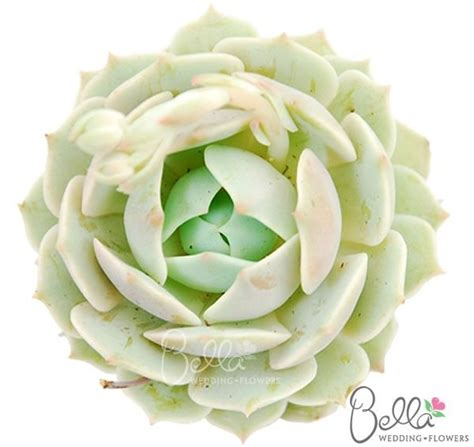 zen wedding bouquet 14 best succulent flower images on succulents