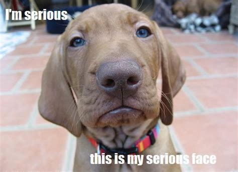 dogs site serious funnydogsite