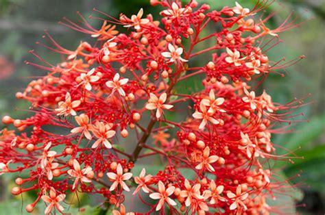 lista nomi fiori nomi di fiori esotici fiori esotici homeimg it nomi di