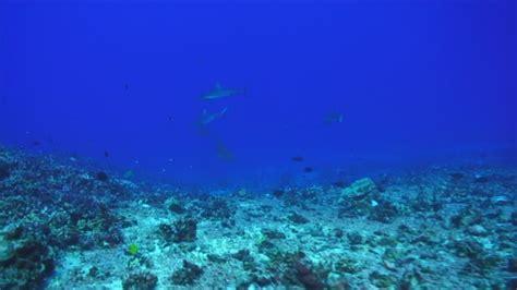 ocean bed sea bed underwater shot pacific ocean hd stock video