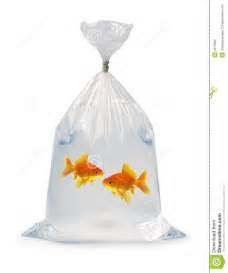 Bathroom Bin Two Goldfish In A Bag Royalty Free Stock Photo Image