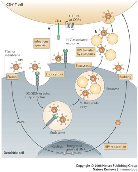 Image result for HIV infection