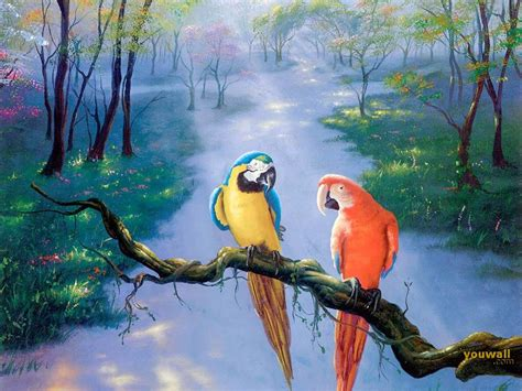 the not so complete birds afoul of america books parrot wallpapers animals wiki pictures