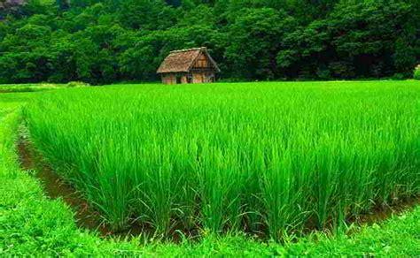 fiori di colore verde sognare il colore verde significato verde nei sogni