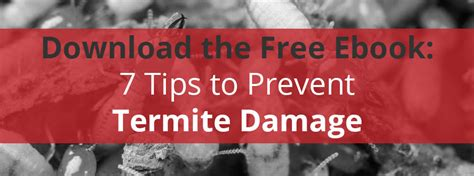 7 tips to prevent bed free download 7 tips to prevent termite damage