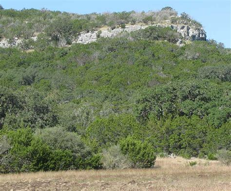 Backyard San Antonio Edwards Plateau Notes On Geology