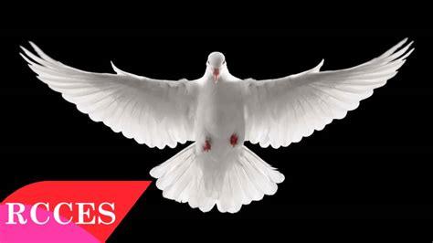 imagenes catolicas espiritu santo cantos al espiritu santo renovaci 243 n carism 225 tica cat 243 lica