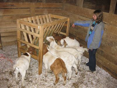 hay racks for goats on the pond farm black friday white saturday and confetti sunday