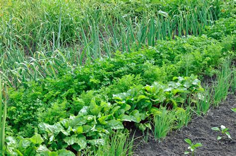 vegetable garden rotation crop rotation the five year crop rotation plan