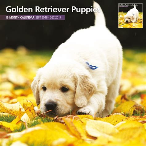 golden retriever puppies ebay golden retriever puppies 2017 16 month traditional calendar 163 9 99 picclick uk