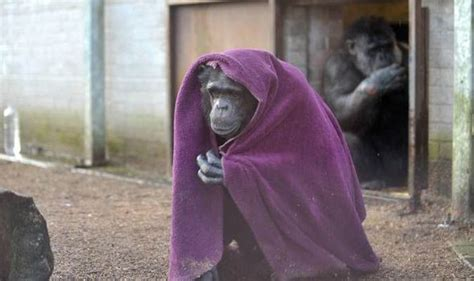And Cold Blanket by Wales Ape And Monkey Sanctuary Boiler Breaks Leaving