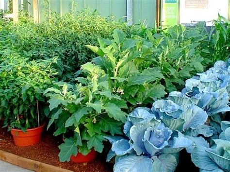 Pot Gardening Vegetables 17 Best Images About Project Veg Patch On