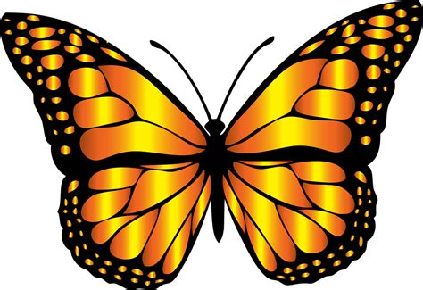 free butterfly clipart butterfly clipart orange butterfly pencil and in color
