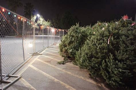 calikatrina a california christmas tree lot