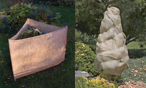 winter tree wrap winter care landscape tips growingreen