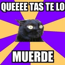 Tasmania Memes - meme anxiety cat queeee tas te lo muerde 22514675