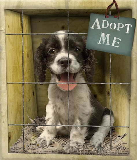 where can you adopt a puppy 7 loving pets you can adopt today mashoid