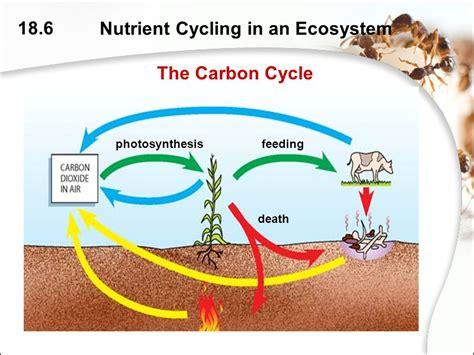 exercice diagramme de gantt bts muc the diagram shows part of a carbon cycle in a habitat