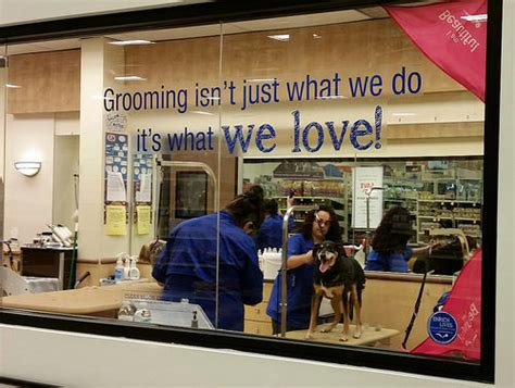 petsmart grooming lapdog creations shedding petsmartgrooming happy