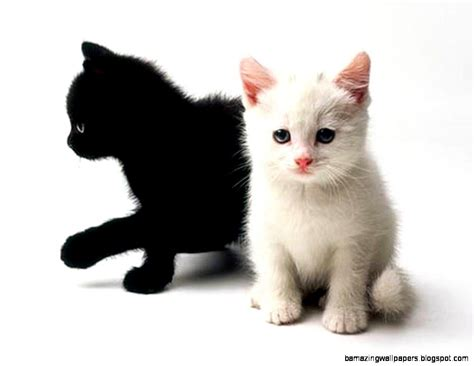 black and white kitten cute black and white kitten wallpaper amazing wallpapers