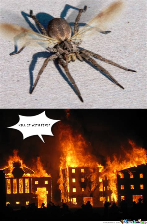 Spider In House Meme - flying spider by megus meme center