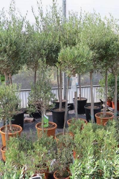 Plantation De Novembre by Vente Fleurs Et Plantes 224 Villefranche Sur Sa 244 Ne Les