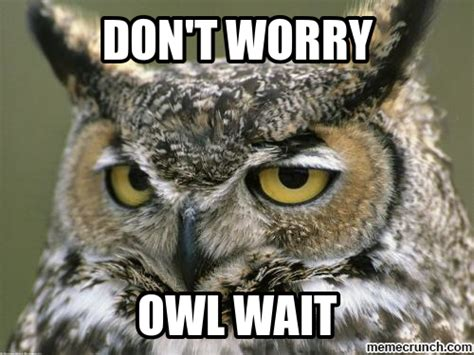 Who Owl Meme - owl wait