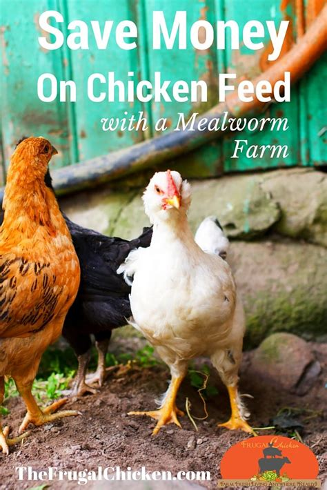 Backyard Chickens Mealworms 10 Best Prezis Pinned By Others Images On