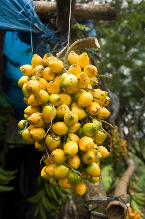 fruit yellow savory yellow fruit