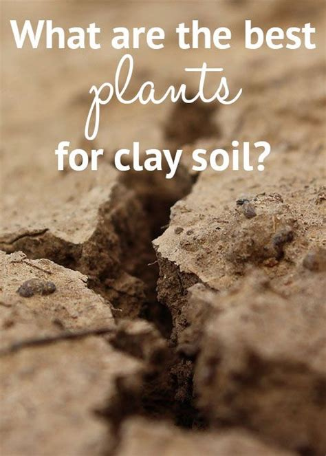 25 best ideas about clay soil on pinterest planting in clay colleges in houston and when to