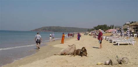 hot photos from goa beach what s up goa wellbeing in goa a selection of spas