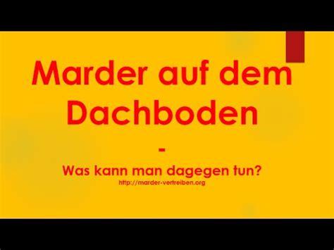 Was Tun Gegen Marder Im Haus 5072 by Marder Auf Dem Dachboden Was Kann Gegen Marder Auf