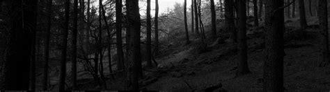 wallpaper black forest black forest wallpapers wallpaper cave