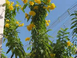 Flower Plants by File Hybrids Plants Yellow Flower 2 Jpg Wikimedia Commons