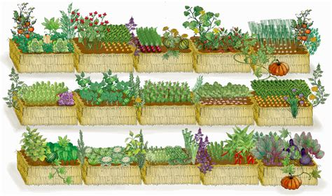 Straw Bale Garden Layout Straw Bale Gardens Dig It