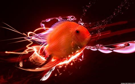 3d wallpaper water fish fish 3d wallpaper high definition wallpapers high