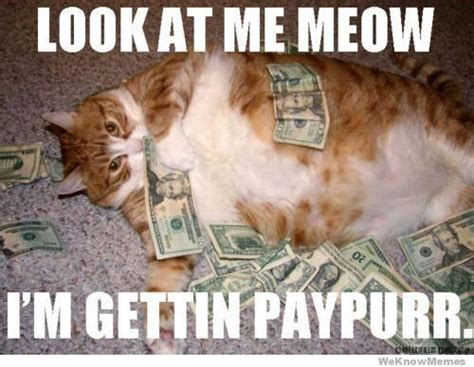 Money Meme - look at me meow im gettin paypurr weknowmemes