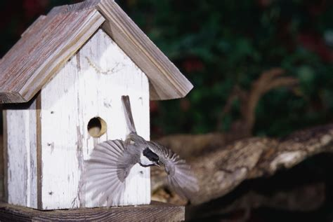times  put  bird houses